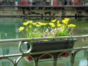Flowers on the River