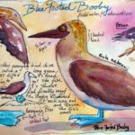 Jacqueline Newbold's Watercolor Journal, Baja